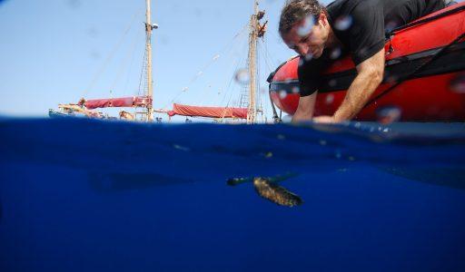 AB tortuga sub barca
