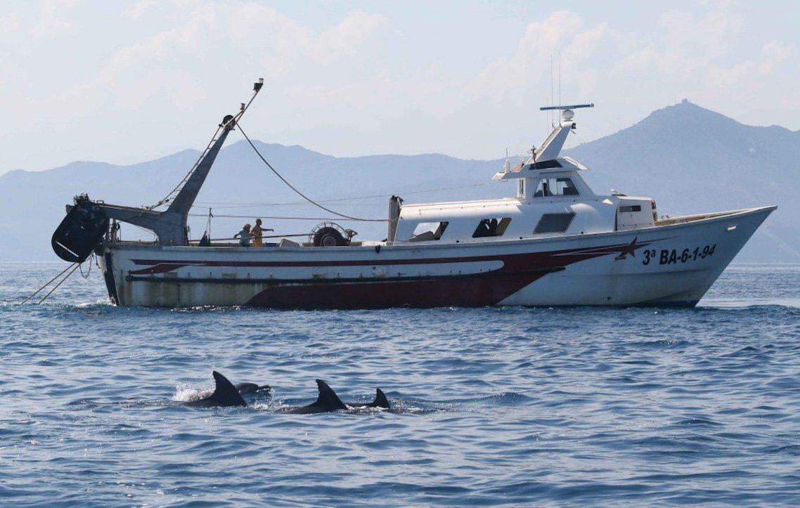 Dofins de Tramuntana